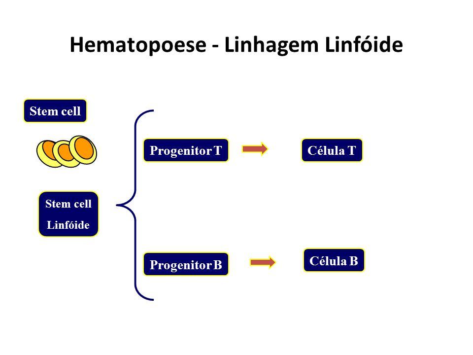 Hematopoese - Linhagem Mielóide CFU - Eos BFU - E CFU - GM BFU - Meg CFU - Mast/Bas Eosinófilos CFU - EEritrócitos CFU - GGranulócitos CFU - MMonócito