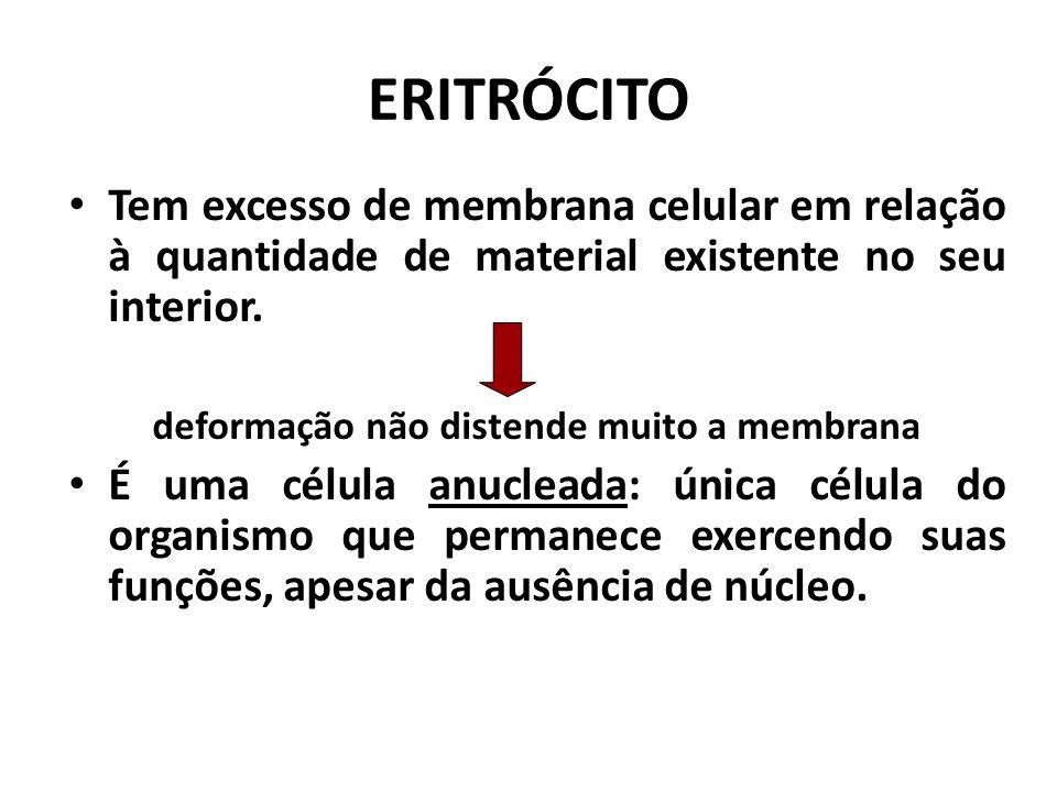 ERITRÓCITO É a mais abundante de todas as células do sangue:  4,5 a 6 milhões/mm³ ( ♂ );  4 a 5,5 milhões/mm³ ( ♀ ). Função principal: transporte de