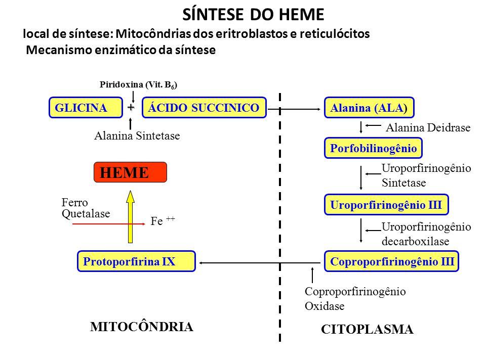 HEMOGLOBINA 1g de Hb pura 1,39 mL de oxigênio Hb: combina-se frouxa e reversivelmente com o oxigênio, que é transportado na forma molecular 6 g de hem