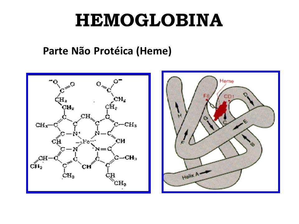 HEMOGLOBINA Hemoglobina Estrutura molecular do heme: