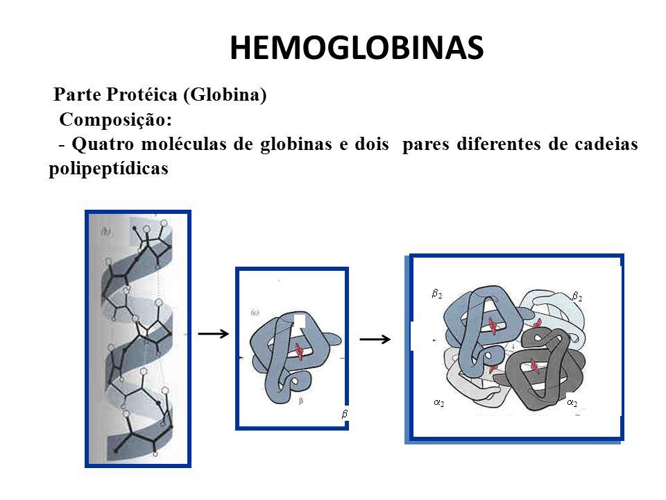 A) Composição - Um átomo de Ferro (bivalente) - Quatro grupos pirrólicos (protoporfirina) Parte Não Protéica (Heme) HEMOGLOBINA