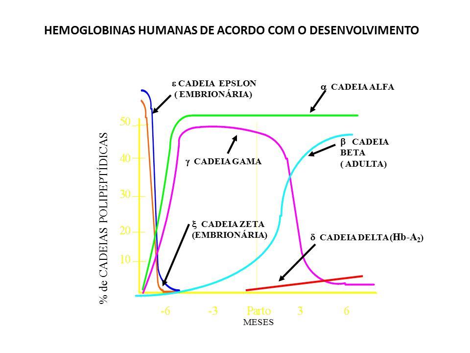 Tipos diferentes de cadeias globínicas que formam hemoglobinas normais no homem Cadeia Epsilon (  ) - Período embrionário Cadeia Zeta (  ) - Período