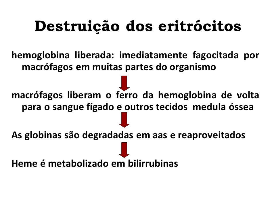 Destruição dos eritrócitos Vida média: 100 a 120 dias Papel das enzimas citoplasmáticas capazes de metabolizar a glicose e formar pequena quantidade d