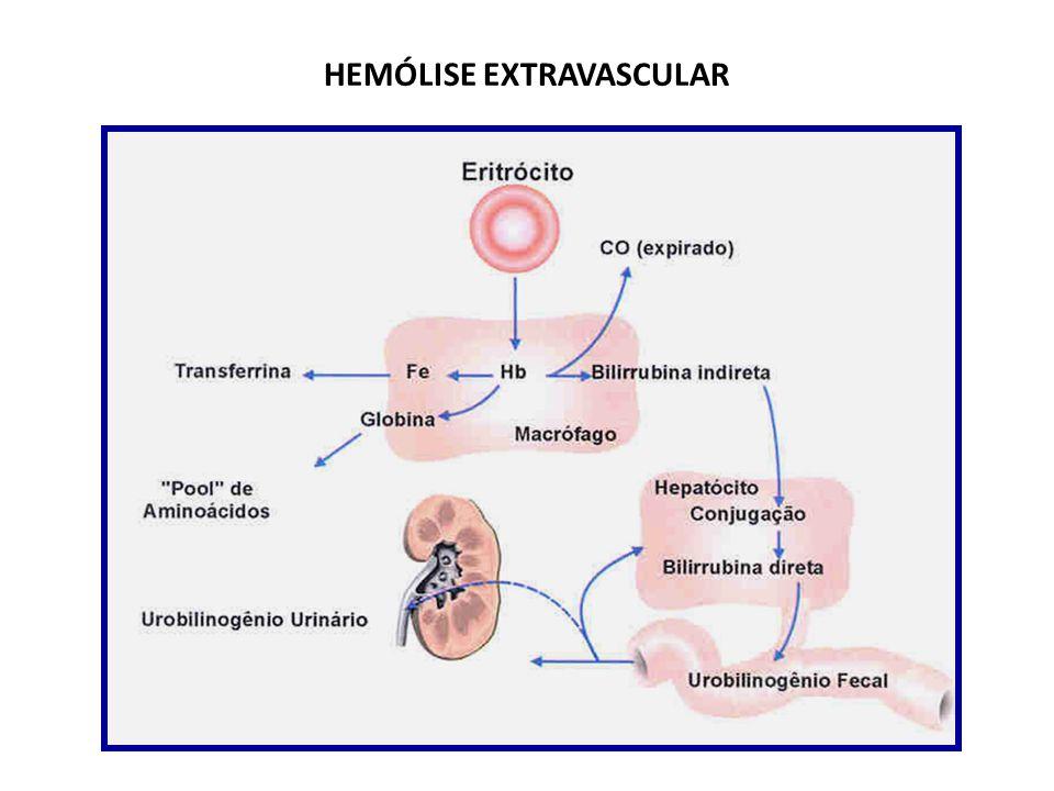 Destruição dos eritrócitos hemoglobina liberada: imediatamente fagocitada por macrófagos em muitas partes do organismo macrófagos liberam o ferro da h