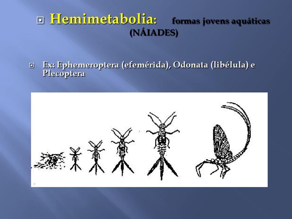  Hemimetabolia : formas jovens aquáticas (NÁIADES) (NÁIADES)  Ex: Ephemeroptera (efemérida), Odonata (libélula) e Plecoptera