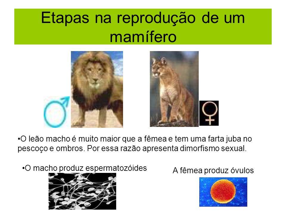 É uma característica de todos os seres vivos.É fundamental para a manutenção da espécie.