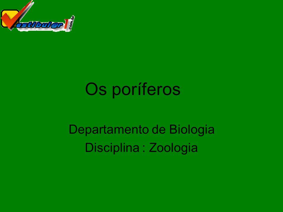 O filo Porífera é constituído por animais pluricelulares que apresentam poros na parede do corpo.