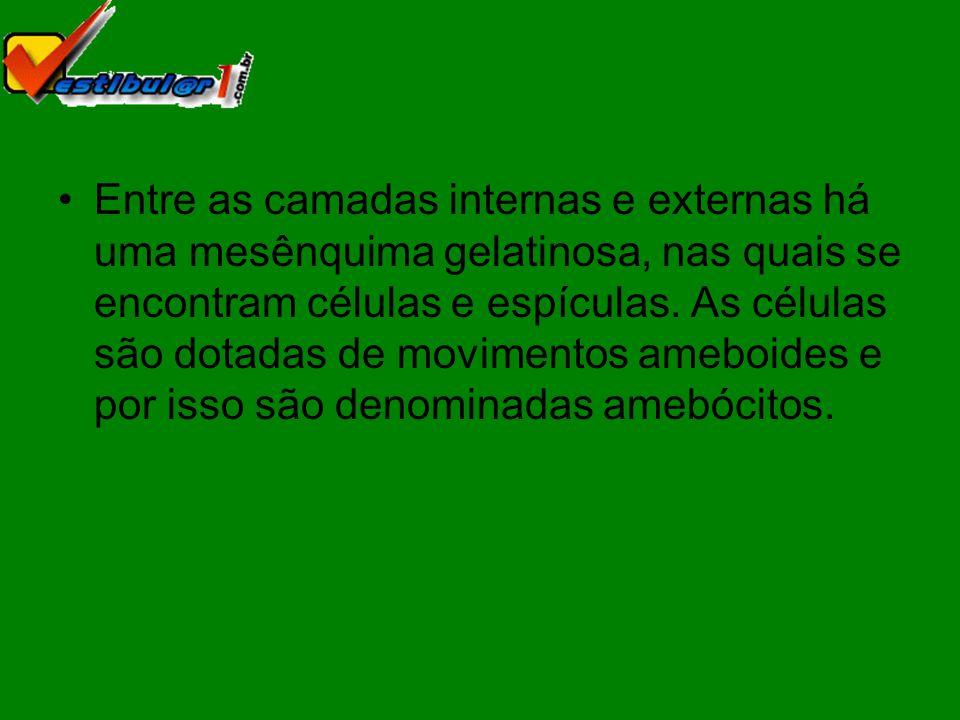 Fim da apresentação de slides Acesse www.vestibular1.com.br