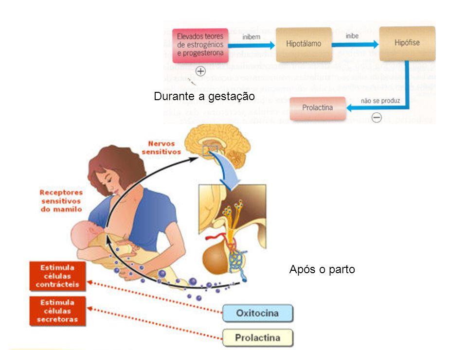Durante a gestação Após o parto
