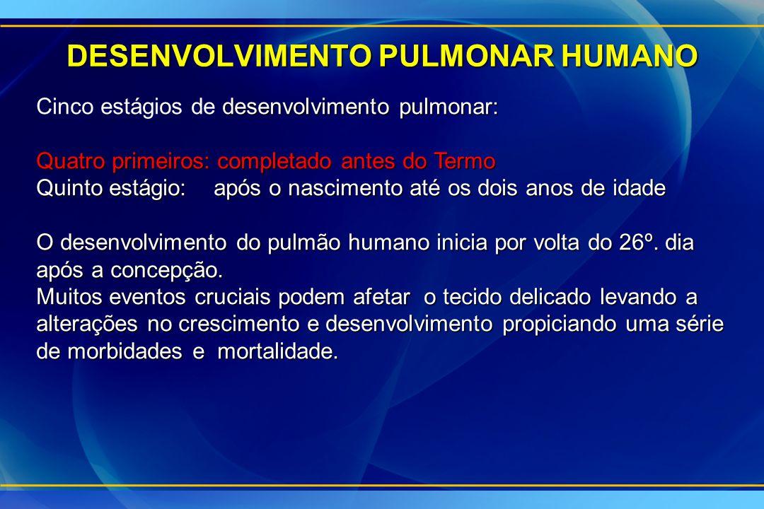 DESENVOLVIMENTO PULMONAR HUMANO desenvolvimento pulmonar: Cinco estágios de desenvolvimento pulmonar: Quatro primeiros: completado antes do Termo Quin