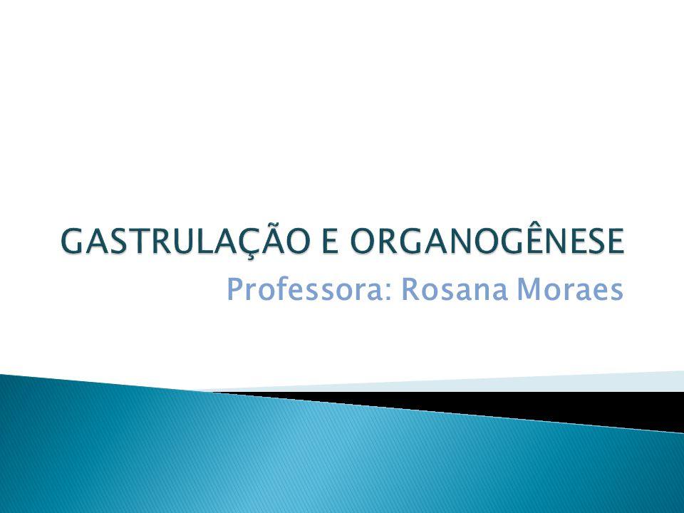 Professora: Rosana Moraes