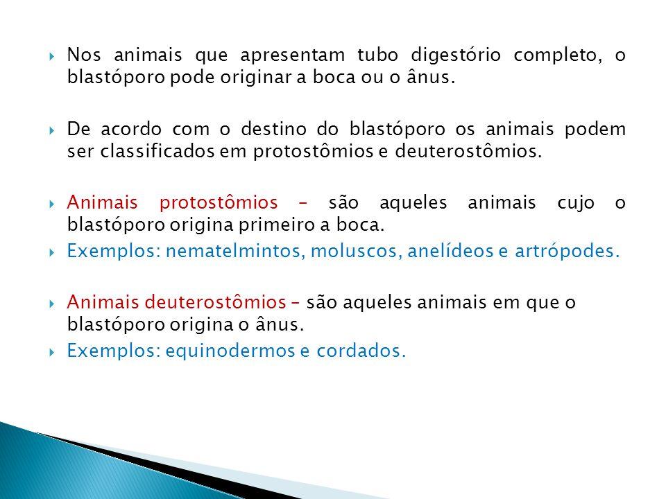  Nos animais que apresentam tubo digestório completo, o blastóporo pode originar a boca ou o ânus.  De acordo com o destino do blastóporo os animais