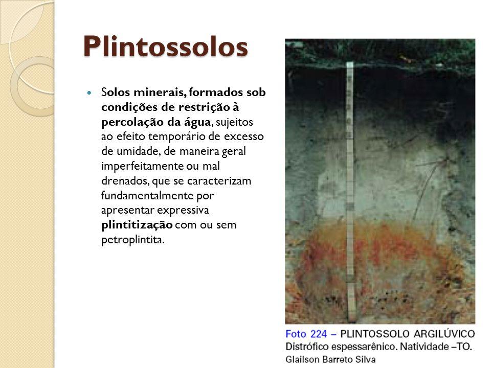 Plintossolos Solos minerais, formados sob condições de restrição à percolação da água, sujeitos ao efeito temporário de excesso de umidade, de maneira