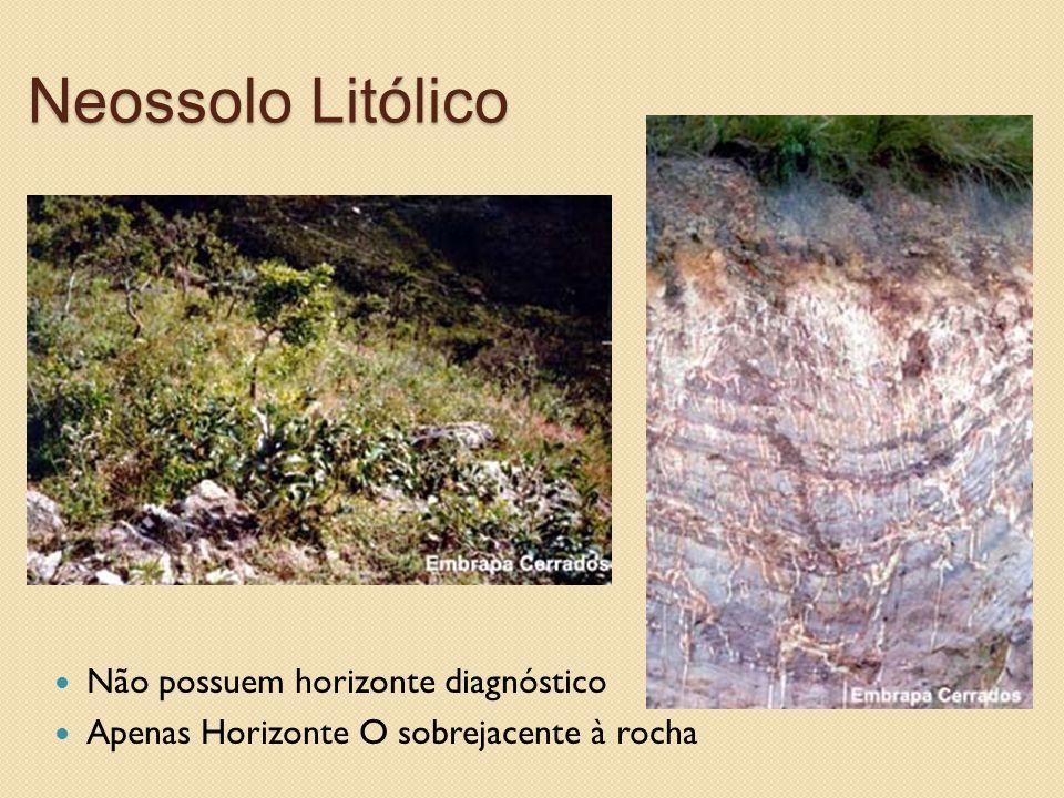 Neossolo Litólico Não possuem horizonte diagnóstico Apenas Horizonte O sobrejacente à rocha