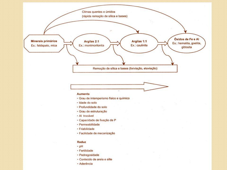 Horizontes Diagnósticos - Sub-superficiais