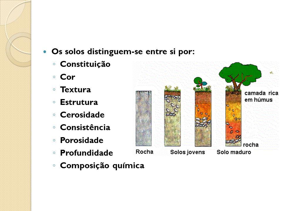 Os solos distinguem-se entre si por: ◦ Constituição ◦ Cor ◦ Textura ◦ Estrutura ◦ Cerosidade ◦ Consistência ◦ Porosidade ◦ Profundidade ◦ Composição q