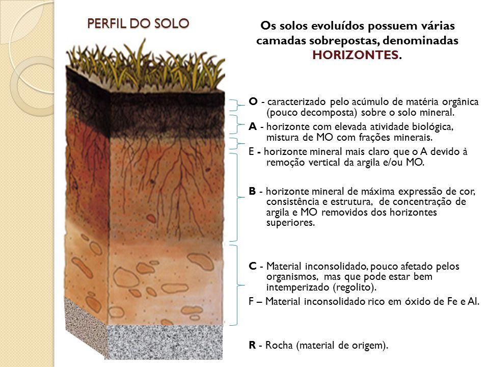 PERFIL DO SOLO O - caracterizado pelo acúmulo de matéria orgânica (pouco decomposta) sobre o solo mineral. A - horizonte com elevada atividade biológi