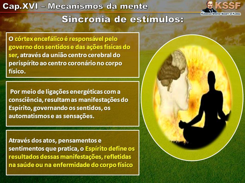 O córtex encefálico é responsável pelo governo dos sentidos e das ações físicas do ser, através da união centro cerebral do perispírito ao centro coronário no corpo físico.