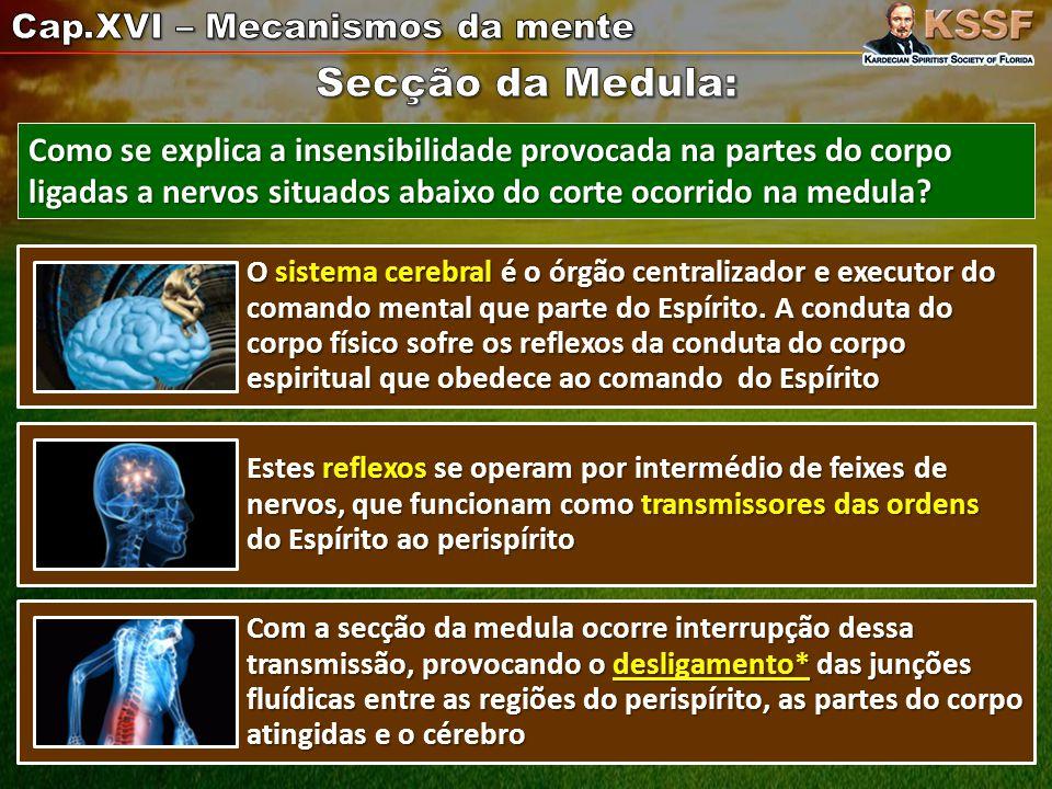 O sistema cerebral é o órgão centralizador e executor do comando mental que parte do Espírito.