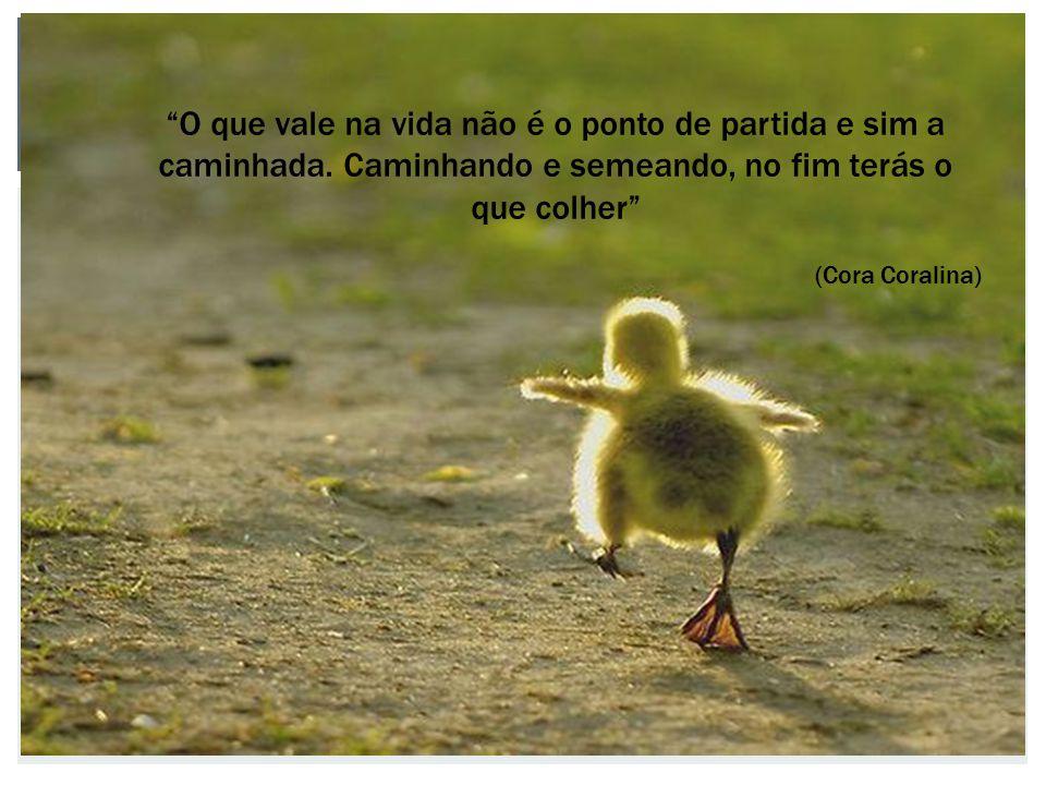 """""""O que vale na vida não é o ponto de partida e sim a caminhada. Caminhando e semeando, no fim terás o que colher"""" (Cora Coralina)"""
