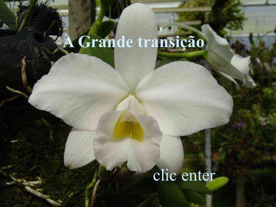 A Grande transição clic enter