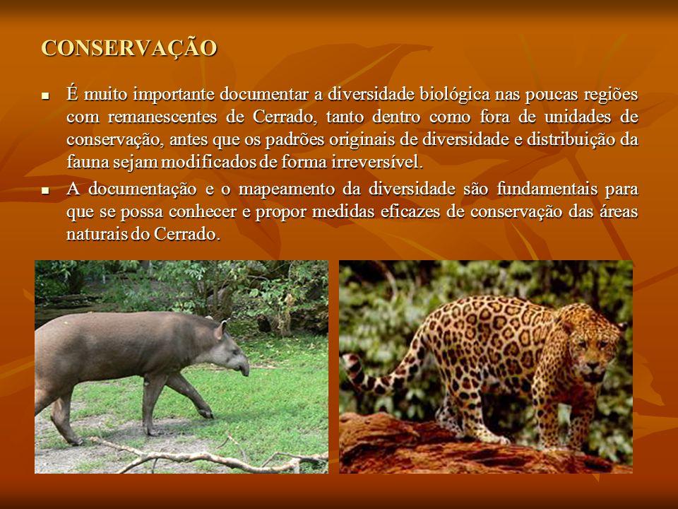 CONSERVAÇÃO É muito importante documentar a diversidade biológica nas poucas regiões com remanescentes de Cerrado, tanto dentro como fora de unidades de conservação, antes que os padrões originais de diversidade e distribuição da fauna sejam modificados de forma irreversível.