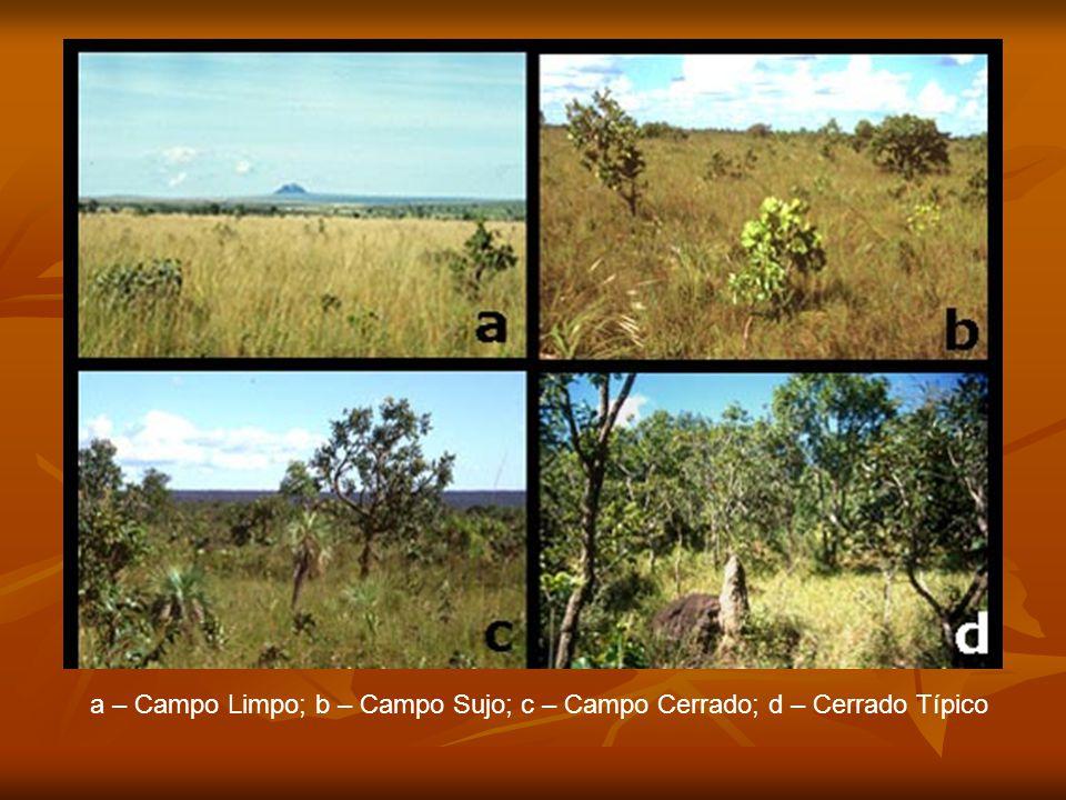 a – Campo Limpo; b – Campo Sujo; c – Campo Cerrado; d – Cerrado Típico