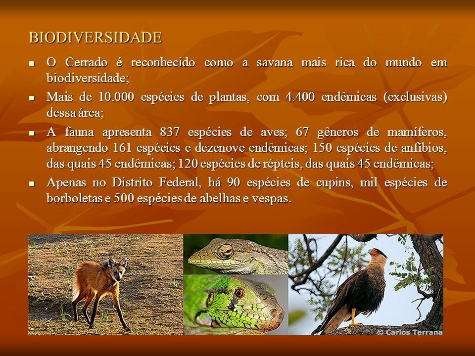 BIODIVERSIDADE O Cerrado é reconhecido como a savana mais rica do mundo em biodiversidade; O Cerrado é reconhecido como a savana mais rica do mundo em biodiversidade; Mais de 10.000 espécies de plantas, com 4.400 endêmicas (exclusivas) dessa área; Mais de 10.000 espécies de plantas, com 4.400 endêmicas (exclusivas) dessa área; A fauna apresenta 837 espécies de aves; 67 gêneros de mamíferos, abrangendo 161 espécies e dezenove endêmicas; 150 espécies de anfíbios, das quais 45 endêmicas; 120 espécies de répteis, das quais 45 endêmicas; A fauna apresenta 837 espécies de aves; 67 gêneros de mamíferos, abrangendo 161 espécies e dezenove endêmicas; 150 espécies de anfíbios, das quais 45 endêmicas; 120 espécies de répteis, das quais 45 endêmicas; Apenas no Distrito Federal, há 90 espécies de cupins, mil espécies de borboletas e 500 espécies de abelhas e vespas.