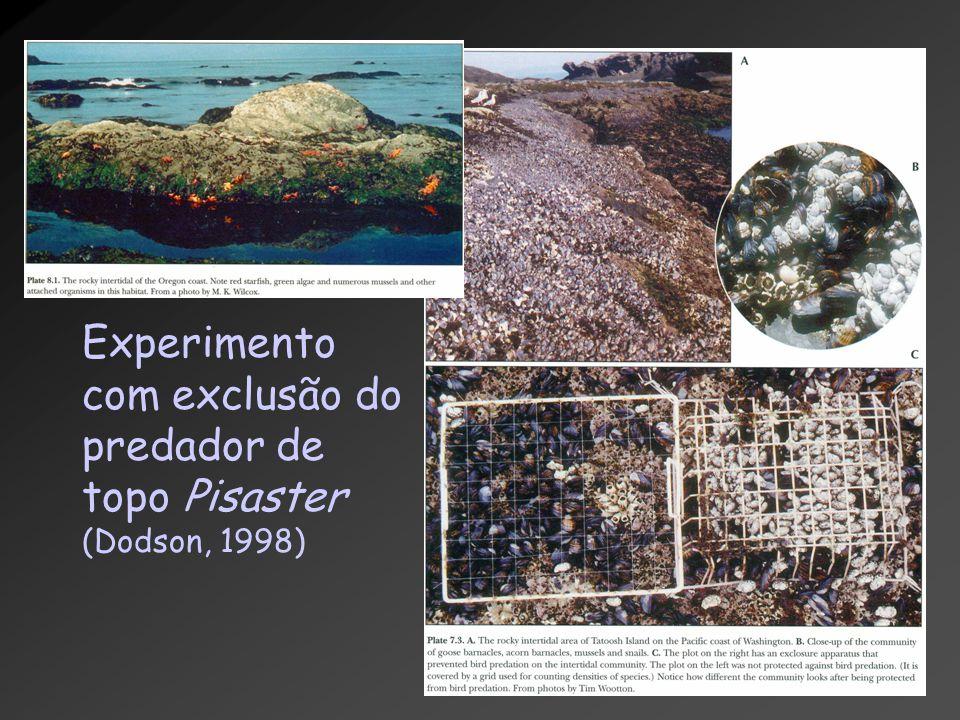 Experimento com exclusão do predador de topo Pisaster (Dodson, 1998)