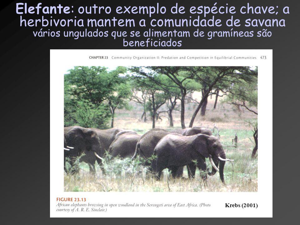 Elefante: outro exemplo de espécie chave; a herbivoria mantem a comunidade de savana vários ungulados que se alimentam de gramíneas são beneficiados K