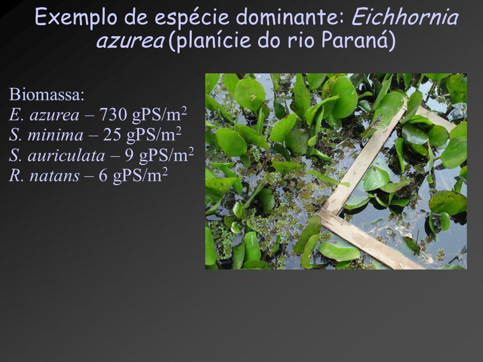 Exemplo de espécie dominante: Eichhornia azurea (planície do rio Paraná) Biomassa: E. azurea – 730 gPS/m 2 S. minima – 25 gPS/m 2 S. auriculata – 9 gP