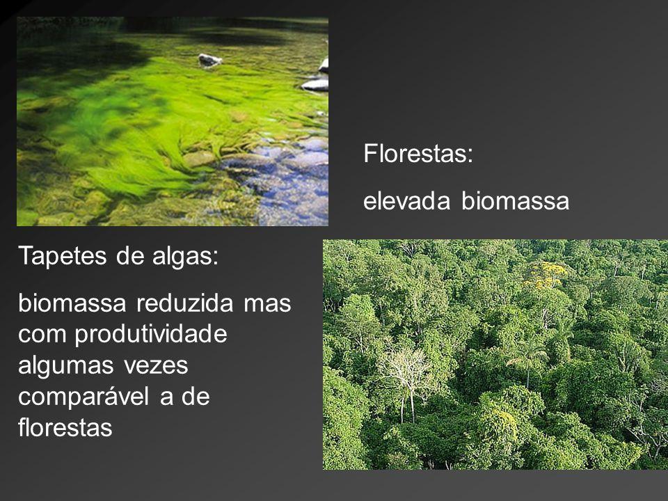 Tapetes de algas: biomassa reduzida mas com produtividade algumas vezes comparável a de florestas Florestas: elevada biomassa