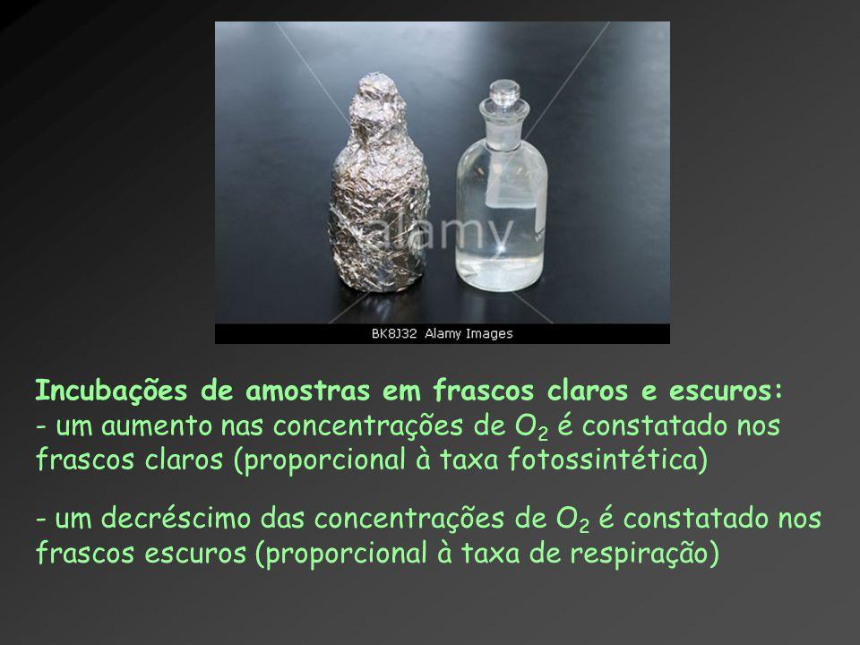 Incubações de amostras em frascos claros e escuros: - um aumento nas concentrações de O 2 é constatado nos frascos claros (proporcional à taxa fotossi