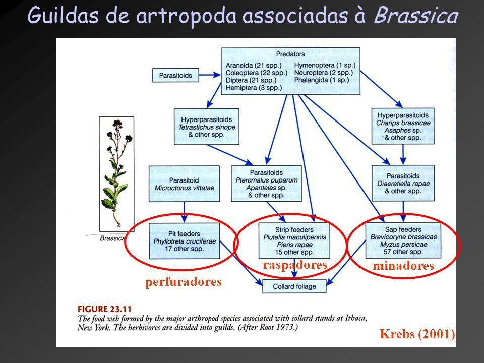 Guildas de artropoda associadas à Brassica perfuradores Krebs (2001) raspadores minadores