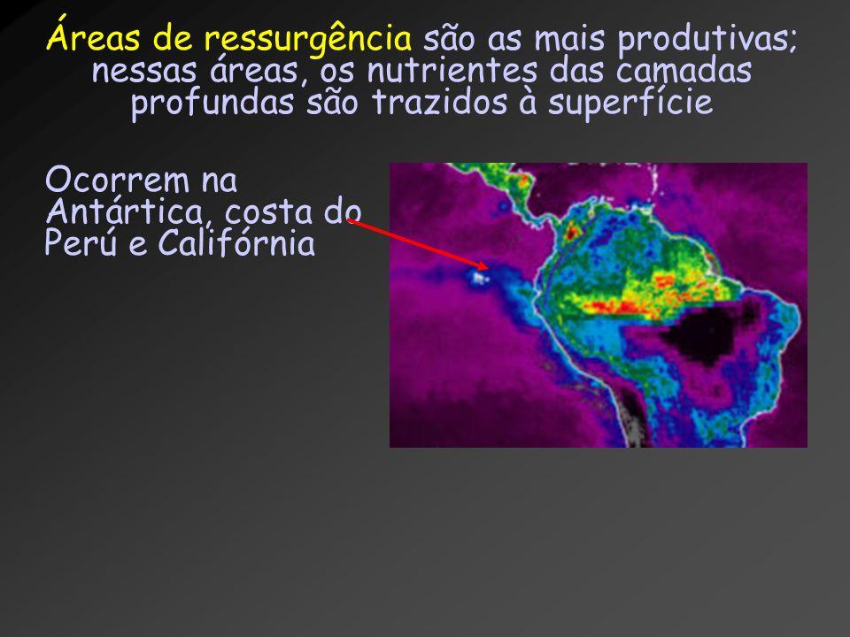 Áreas de ressurgência são as mais produtivas; nessas áreas, os nutrientes das camadas profundas são trazidos à superfície Ocorrem na Antártica, costa