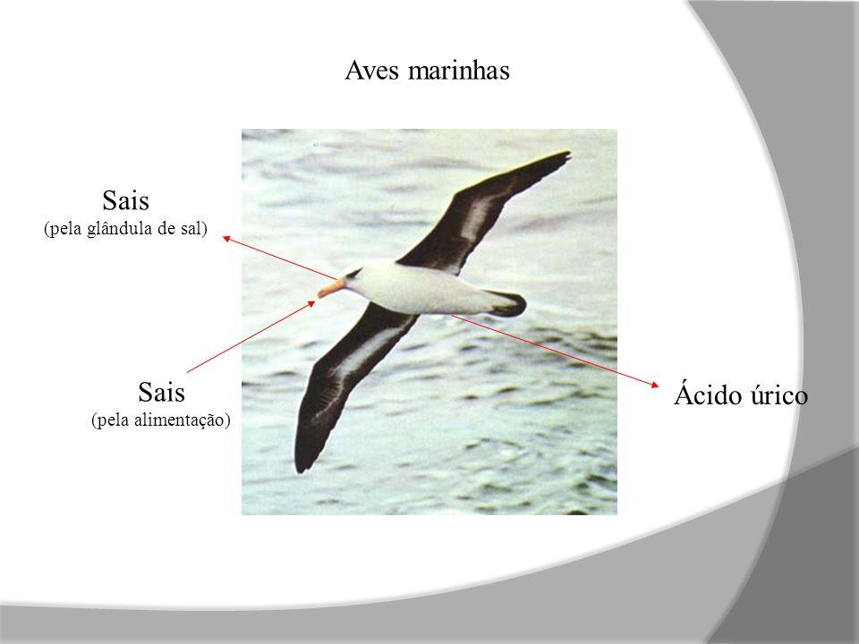 Sais (pela glândula de sal) Ácido úrico Sais (pela alimentação) Aves marinhas