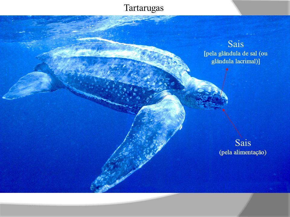 Sais (pela alimentação) Sais [pela glândula de sal (ou glândula lacrimal)] Tartarugas