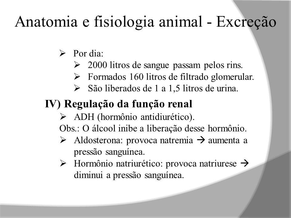 Anatomia e fisiologia animal - Excreção  Por dia:  2000 litros de sangue passam pelos rins.  Formados 160 litros de filtrado glomerular.  São libe