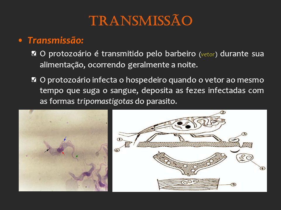 Transmissão Transmissão: O protozoário é transmitido pelo barbeiro (vetor) durante sua alimentação, ocorrendo geralmente a noite. O protozoário infect