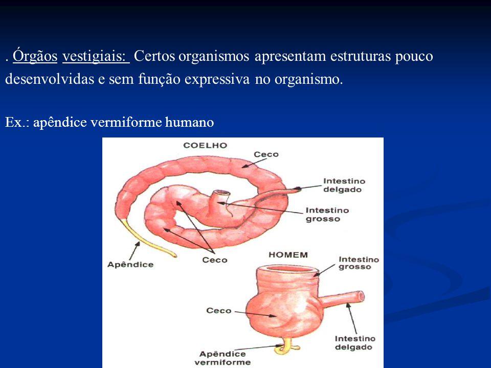 . Órgãos vestigiais: Certos organismos apresentam estruturas pouco desenvolvidas e sem função expressiva no organismo. Ex.: apêndice vermiforme humano