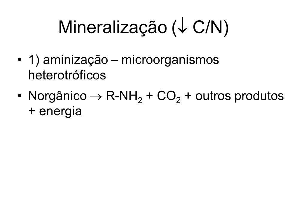 1) aminização – microorganismos heterotróficos Norgânico  R-NH 2 + CO 2 + outros produtos + energia