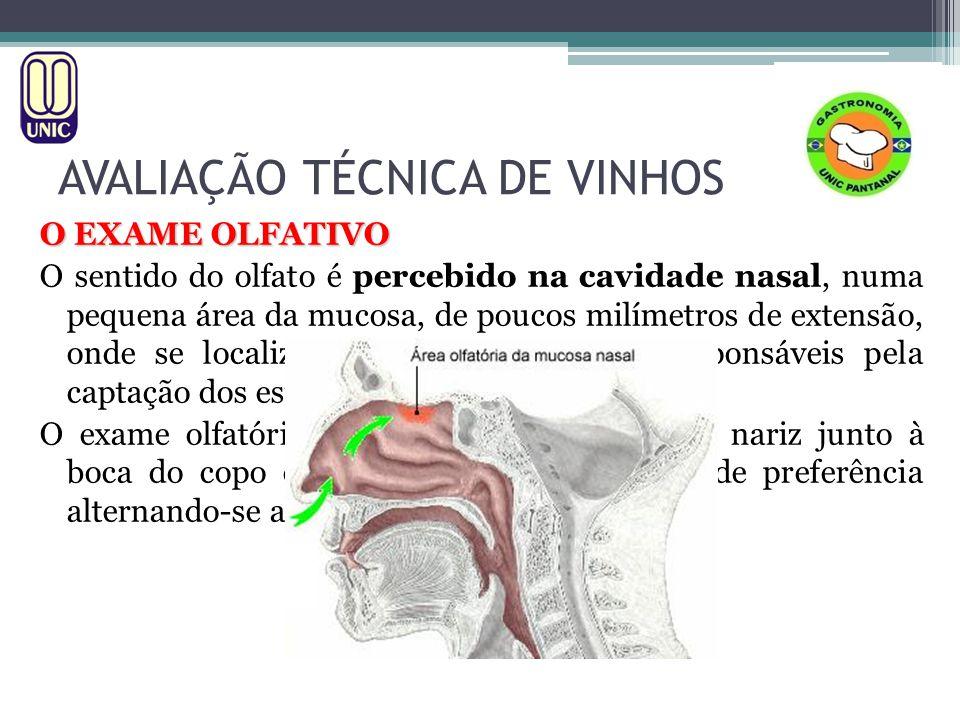AVALIAÇÃO TÉCNICA DE VINHOS O EXAME OLFATIVO O sentido do olfato é percebido na cavidade nasal, numa pequena área da mucosa, de poucos milímetros de e