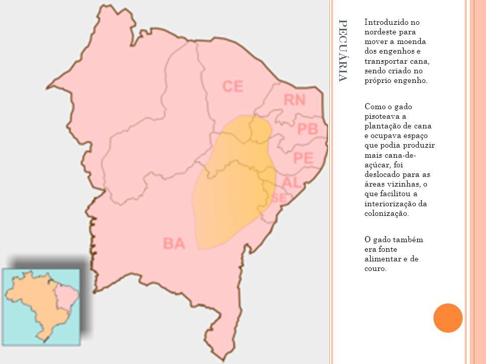PECUÁRIA Introduzido no nordeste para mover a moenda dos engenhos e transportar cana, sendo criado no próprio engenho. Como o gado pisoteava a plantaç
