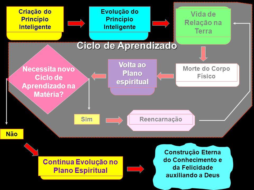 Criação do Princípio Inteligente Evolução do Princípio Inteligente Vida de Relação na Terra Morte do Corpo Físico Volta ao Plano espiritual Necessita