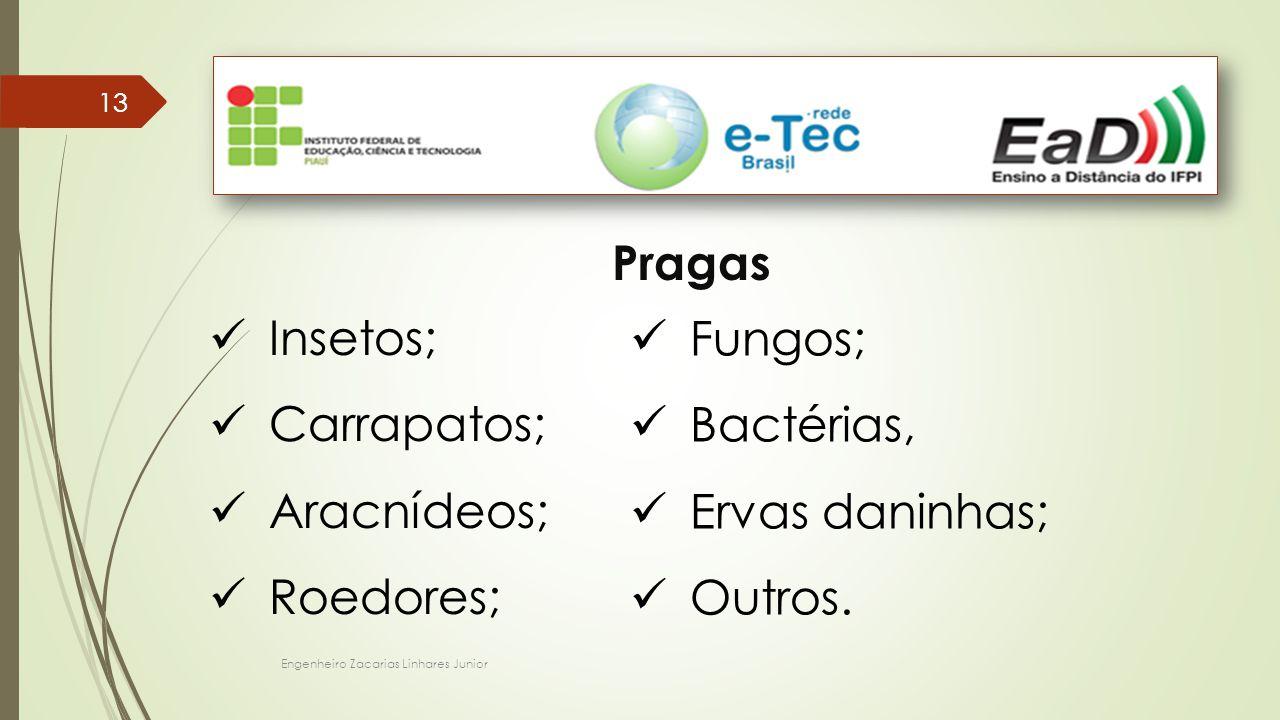 Engenheiro Zacarias Linhares Junior 13 Pragas Insetos; Carrapatos; Aracnídeos; Roedores; Fungos; Bactérias, Ervas daninhas; Outros.