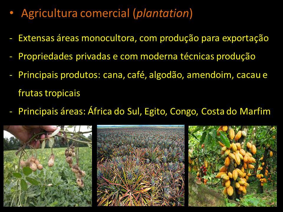-Extensas áreas monocultora, com produção para exportação -Propriedades privadas e com moderna técnicas produção -Principais produtos: cana, café, alg
