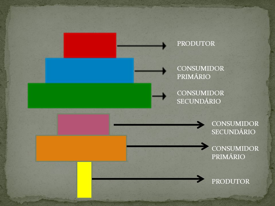 PRODUTOR CONSUMIDOR PRIMÁRIO CONSUMIDOR SECUNDÁRIO CONSUMIDOR SECUNDÁRIO CONSUMIDOR PRIMÁRIO PRODUTOR