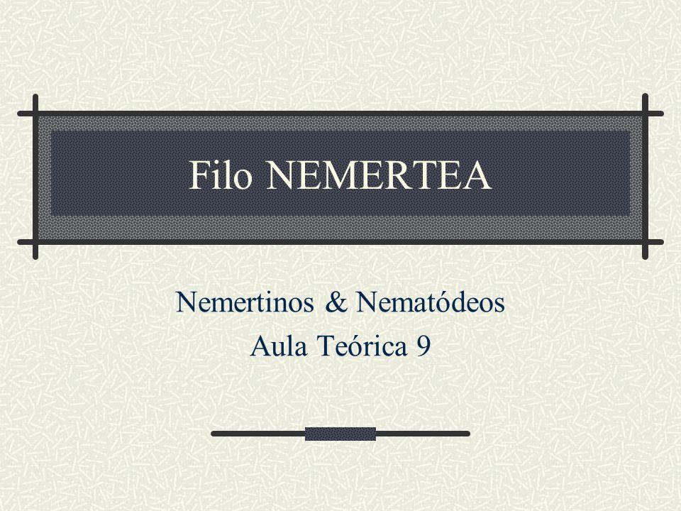 Filo NEMERTEA Nemertinos & Nematódeos Aula Teórica 9