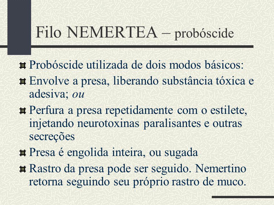 Filo NEMERTEA – probóscide Probóscide utilizada de dois modos básicos: Envolve a presa, liberando substância tóxica e adesiva; ou Perfura a presa repe