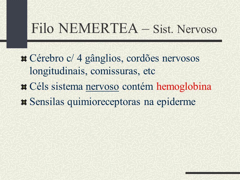 Filo NEMERTEA – Sist. Nervoso Cérebro c/ 4 gânglios, cordões nervosos longitudinais, comissuras, etc Céls sistema nervoso contém hemoglobina Sensilas